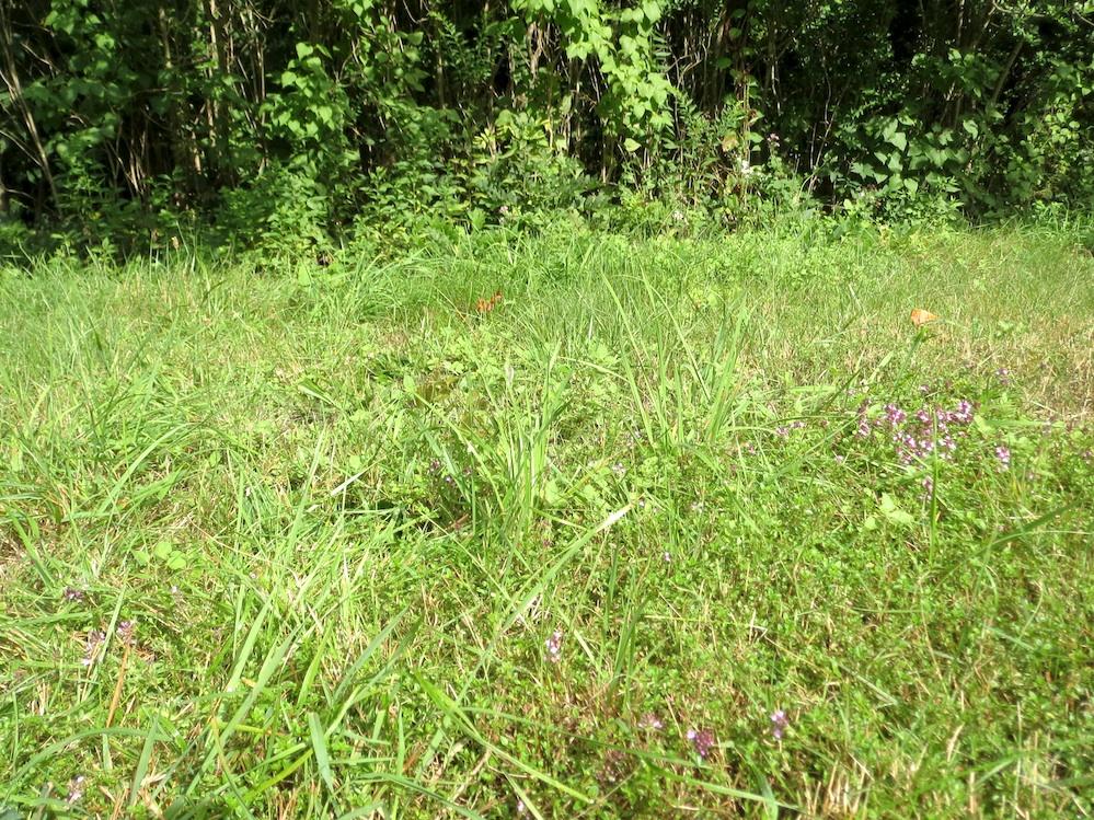 mixed lawn