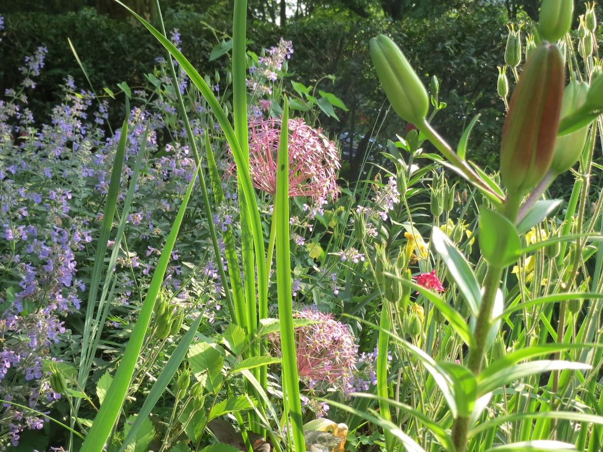 wild flowers lillies