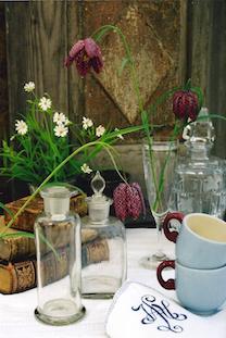 Fritillaria meleagris guinea hen schachbrettblume mocca cups pov