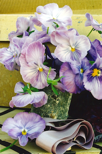 Viola tricolor band pov