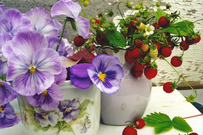Viola tricolor pansies strawberries poc