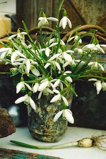 easter flowers bulb pov