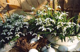 easter flowers eggs pov