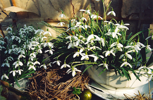 easter flowers pov