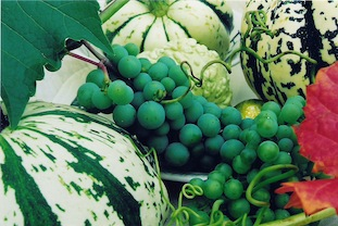 gourds green white grapes copy