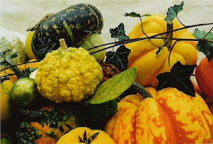 gourds pumpkins ivy poc