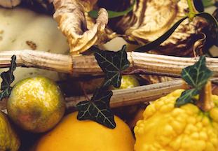mistletoe golden leaf pov