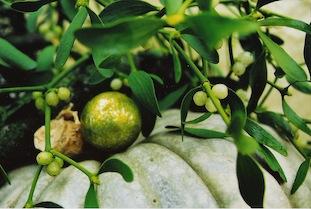 mistletoe gourd poc
