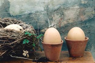 nest eggs pov