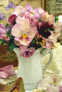 pansies milkpot marie luise pov