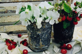 pansies strawberries tin pots poc