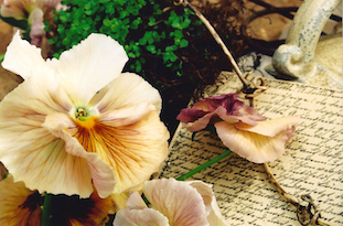 pansy old handwritten letter