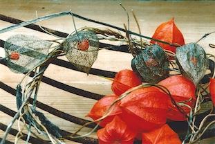 red fruits poc
