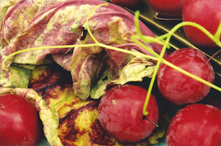 rhubarb leaf red prunes rote pflaumen pov