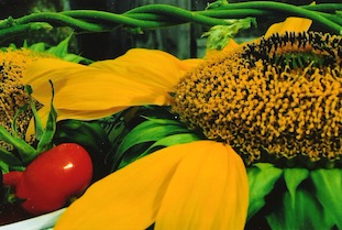 sunflower tomatoe poc