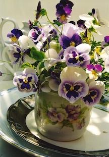 viola tricolores pansies plate pov