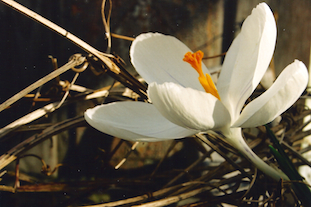 white flower pov