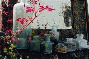 wild geranium old bottles poc