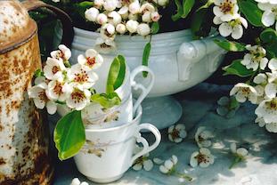 wild pears bloom wilde birnen blueten pov