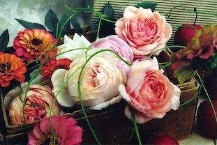 zinnia rosen poc